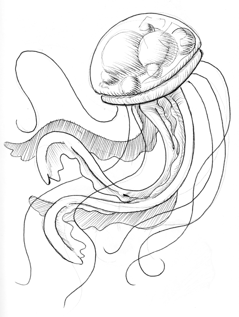 Line Art Jellyfish : Image gallery jellyfish line drawing